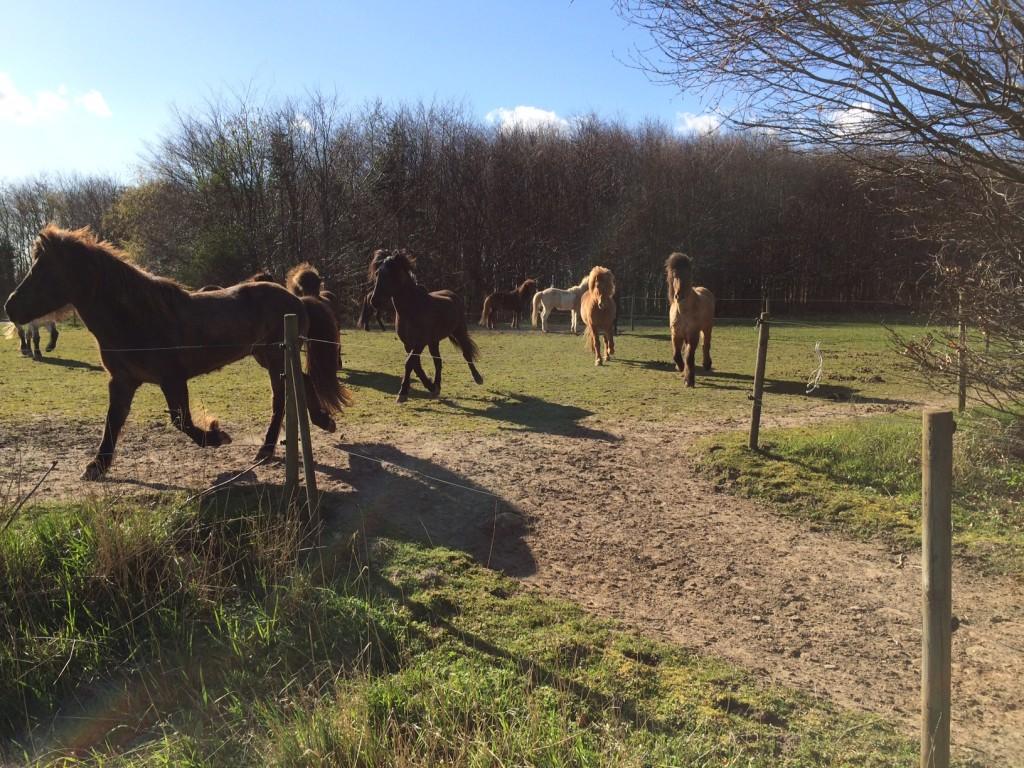 Glade heste en sommeraften