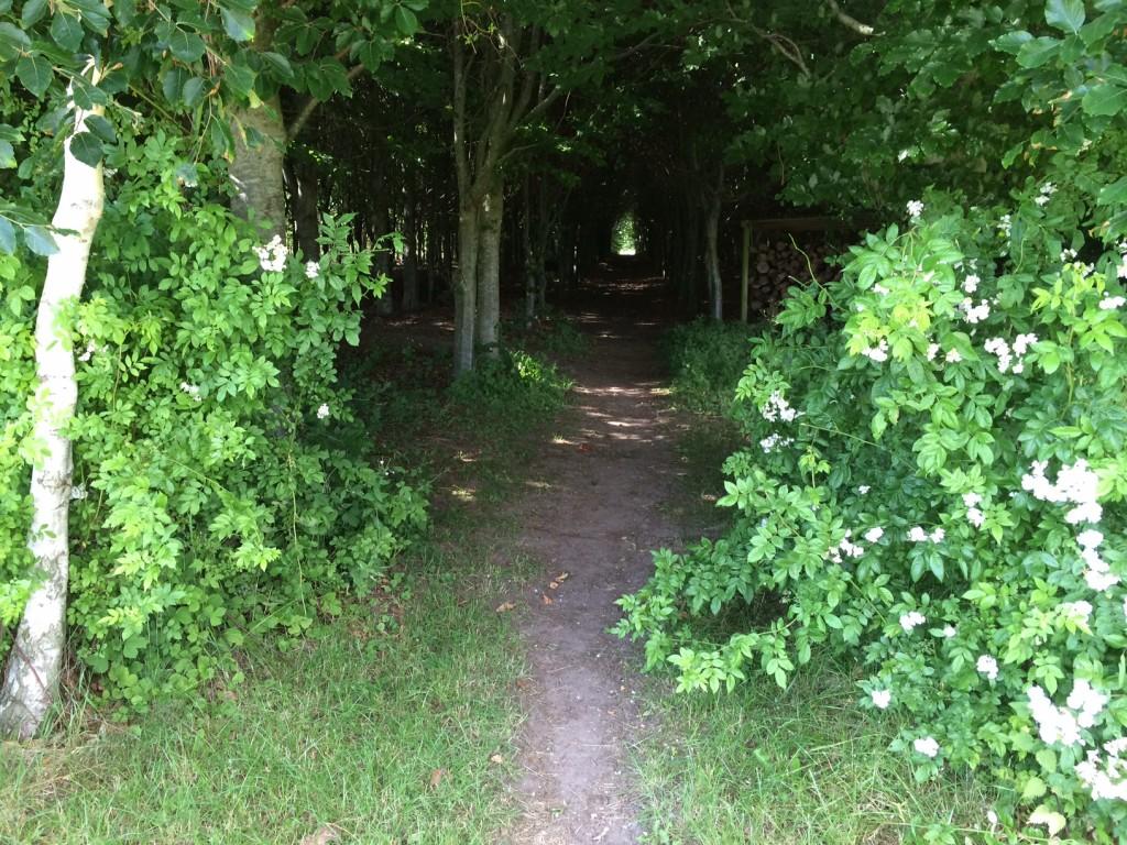 Stien gennem skoven