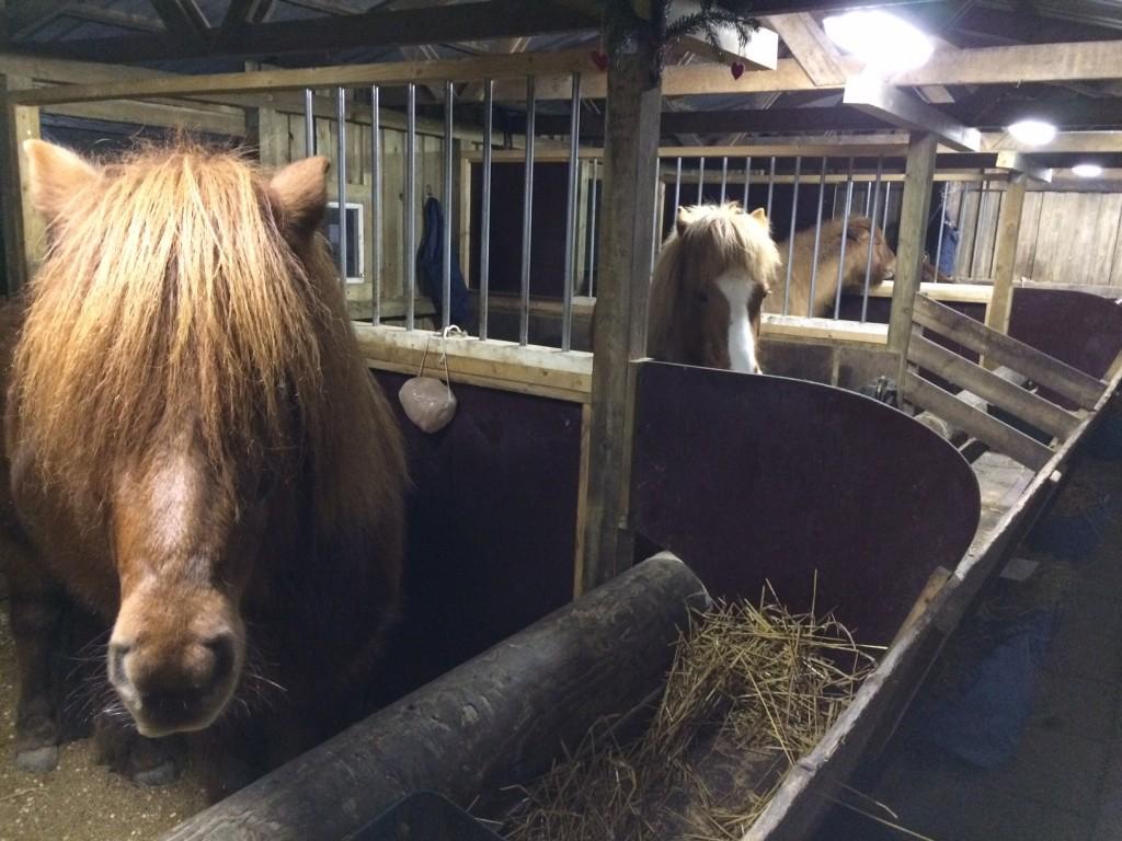 Heste i træstalden